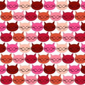 chat_c_est_toi_le_chat_rouge_M