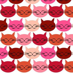 chat_c_est_toi_le_chat_rouge
