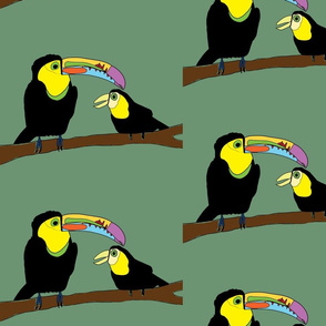 Keel Billed Toucans