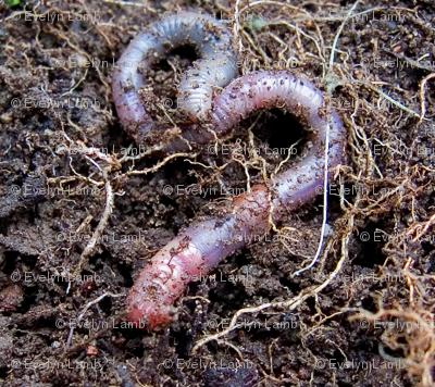 Earthworm Love