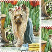 Yorkie_gardener
