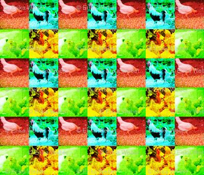 ChickenpopartEW