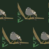 Rwhite-crowned-sparrow-g-2013-color_shop_thumb