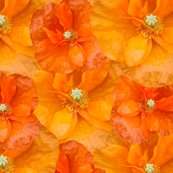 Orange_poppy_seamless_shop_thumb