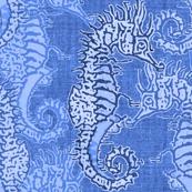 Seahorse Ocean