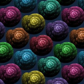 Snail Shells