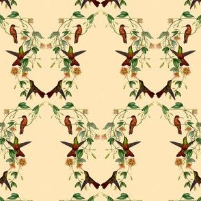Hummingbirds pattern - old nature drawings by Gould