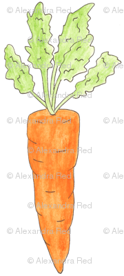 small carrots on white