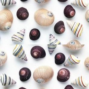 Studio_Sea_Shells_1