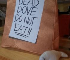 Rrdead_dove_do_not_eat_comment_298950_thumb