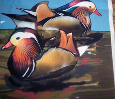 Rmandarin_ducks_comment_316103_thumb
