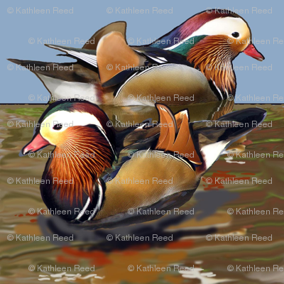 mandarin_ducks