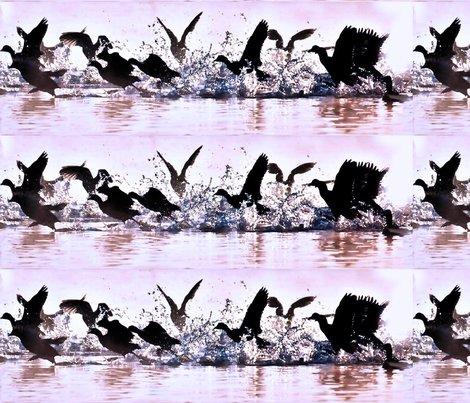 Wild_water_birds_shop_preview