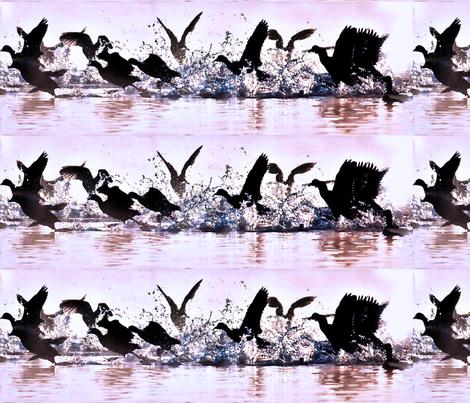 wild_water_birds