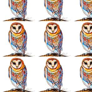 Southwestern Barn Owl on White