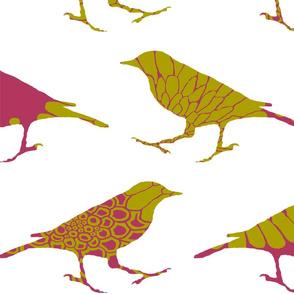 birdsofafeather1