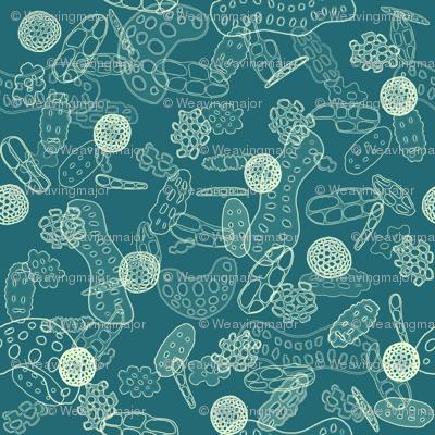 coral sand - ocean