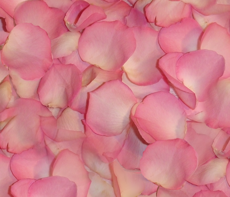 Rose's Petals ~ Large fabric by peacoquettedesigns on Spoonflower - custom fabric