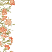 Carnation Border Print
