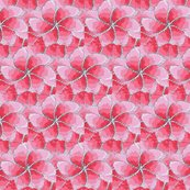Rrrrpink_daisy_flowers_0989098_ed_ed_ed_ed_shop_thumb