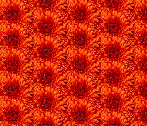 Chrysanthemum fabric by ceruleana_fiber_arts on Spoonflower - custom fabric