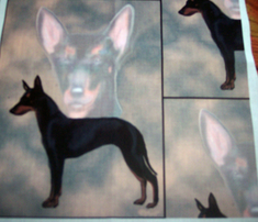 Rmanchester_terrier_black_comment_316104_thumb
