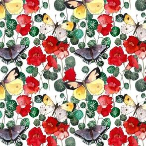 butterfly/nasturtium