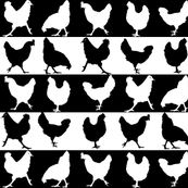 Black and White Chickens