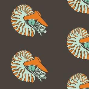 Blue and Orange Nautilus