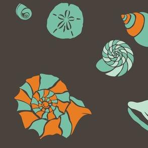 Blue and Orange Shells