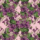 Violet Explosion