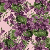 Violets_cutout_on_pink_divided__ai_300_dpi_14x12_upload_shop_thumb