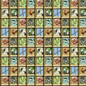Rattic_windows_aviary8_shop_thumb