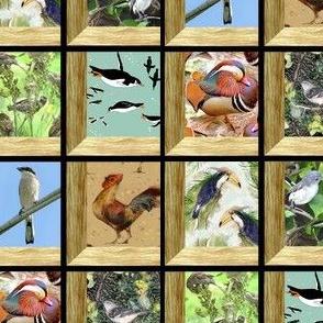 Attic Windows Aviary