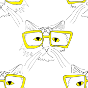 geeky cat