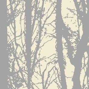 Silver Birch Forest