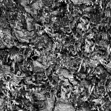 Grey Mossy Bark
