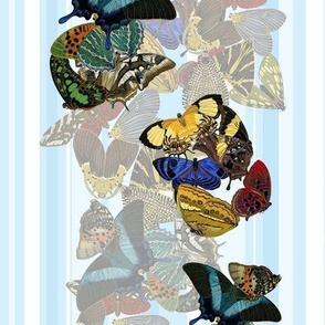 butterfly_stripes