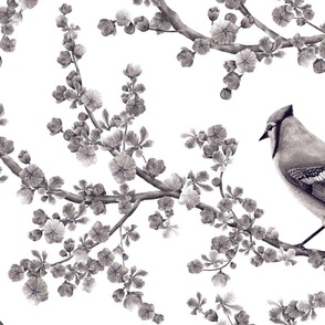 Backyard_Birds_square_REPEAT