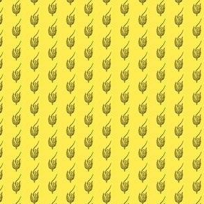 Alopecurus carolinianus yellow
