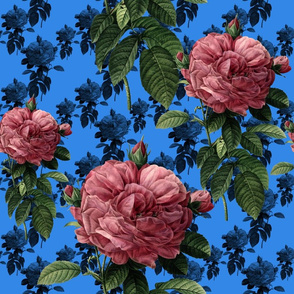 Redoute' Roses ~ Sweet Pink &amp; Blue ~ Large