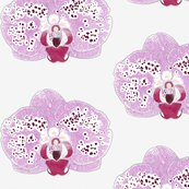 Rpurple_orchid_simple_shop_thumb