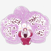 Simple purple orchid