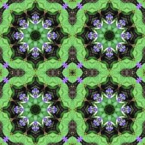 Violet_star_2