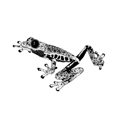 Graphic Frog