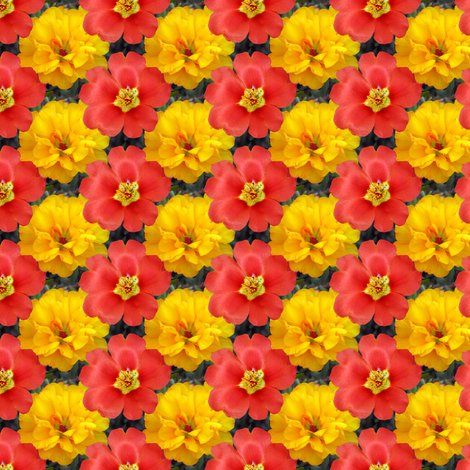 Rryellow_and_red_moss_roses_1881_shop_preview
