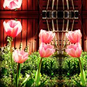Rrbarn_tulips_ed_ed_shop_thumb