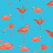 Flamingos...