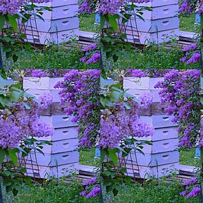 Bee_Boxes_and_Lilacs_at_Dusk