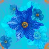 Blue poppy aqua